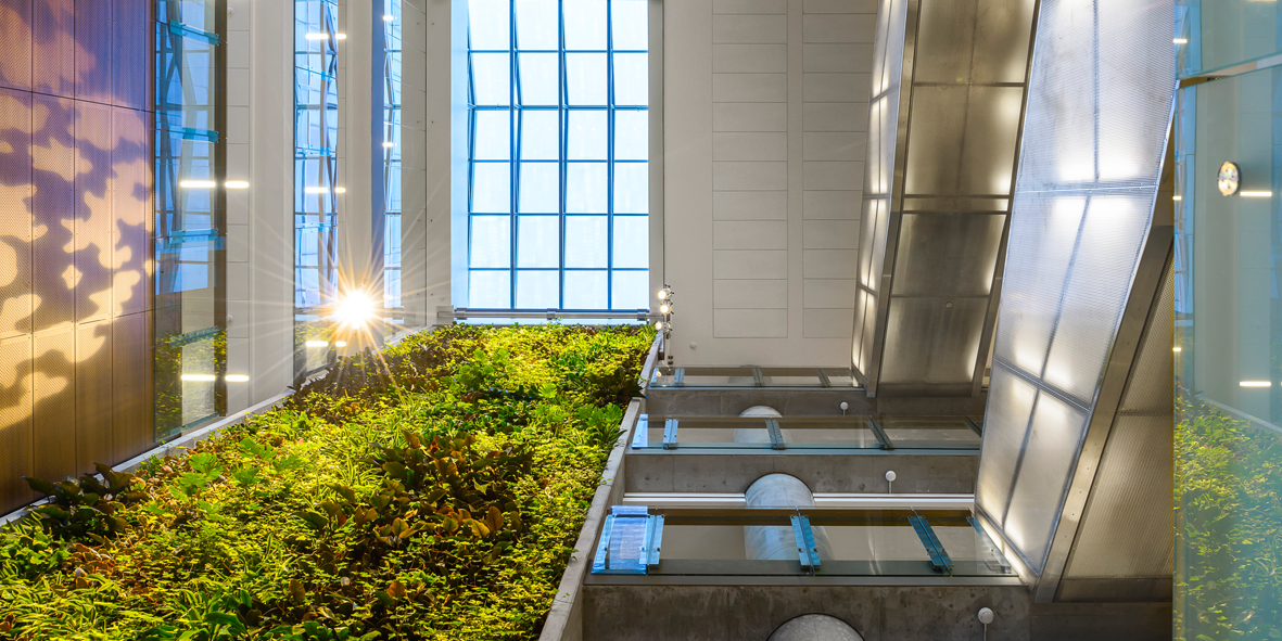 Looking up at the green wall in the FSS building atrium
