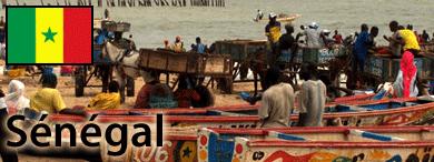 rech terrain Senegal