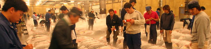fish market in Japan
